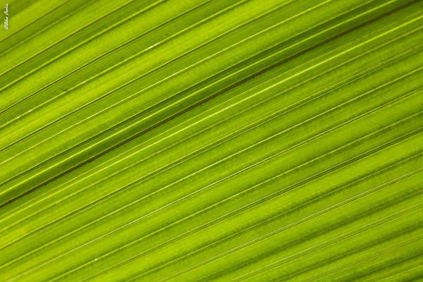 Photograph - Green Field by Alexander Fedin