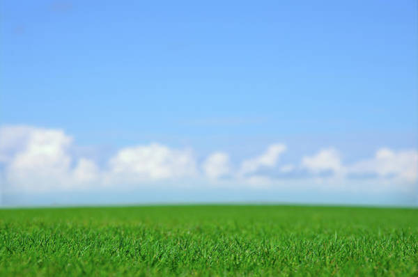 Photograph - Green Field And Blue Sky by Johannescompaan