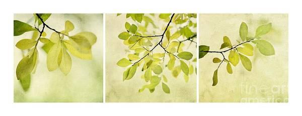 Three Trees Photograph - Green Foliage Triptychon by Priska Wettstein
