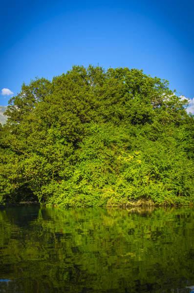 Photograph - Green Forest by Sotiris Filippou
