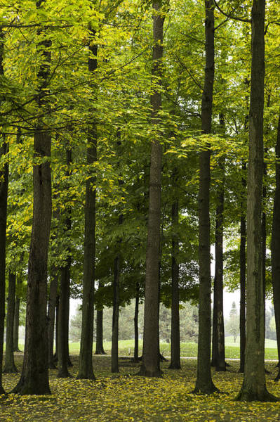 Wall Art - Photograph - Green Forrest  by M Cohen