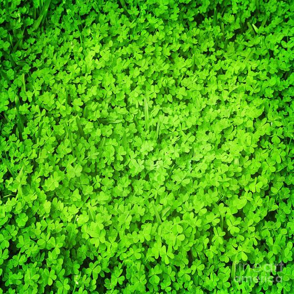 Saint Patricks Day Photograph - Green Fresh Clover Field by Anna Om