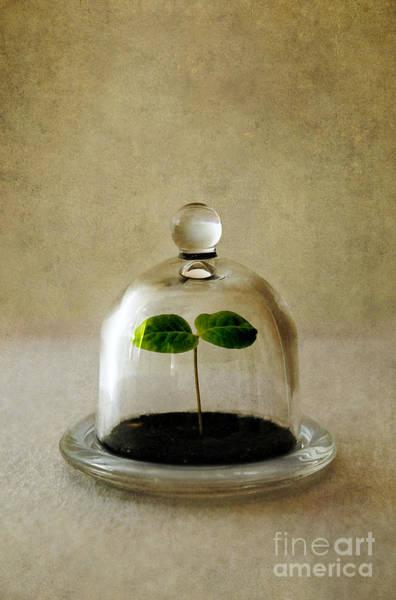 Photograph - Green Fresh Plant Under The Glass Cover by Jaroslaw Blaminsky