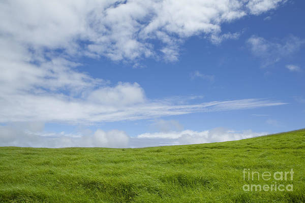 Photograph - Green Grass And Blue Sky by Charmian Vistaunet