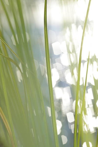 Wall Art - Photograph - Green Grass And Glittering Lake - Available For Licensing by Ulrich Kunst And Bettina Scheidulin