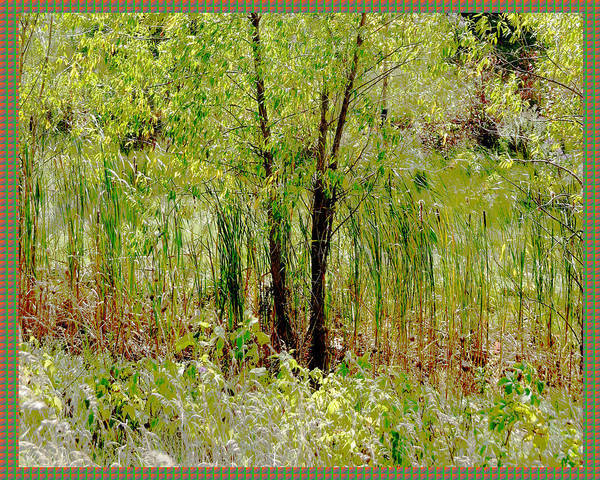 Ontario Mixed Media - Green Grass Line Curtain Over Local Lake Pond At Oakville Ontario Canada        by Navin Joshi