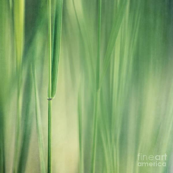 Wall Art - Photograph - Green Grass by Priska Wettstein