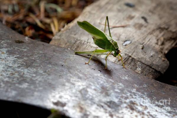 Photograph - Green Grasshopper On Axe by Belinda Greb
