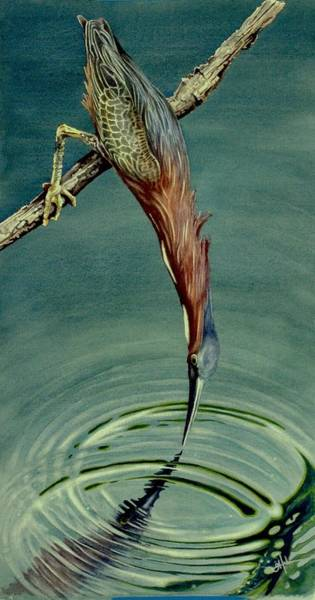 Painting - Green Heron by Greg and Linda Halom