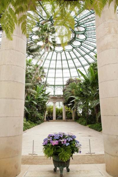Glasshouse Photograph - Green House With Palms by Ton Kinsbergen/science Photo Library