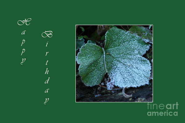 Photograph - Green Leaf Card by Randi Grace Nilsberg