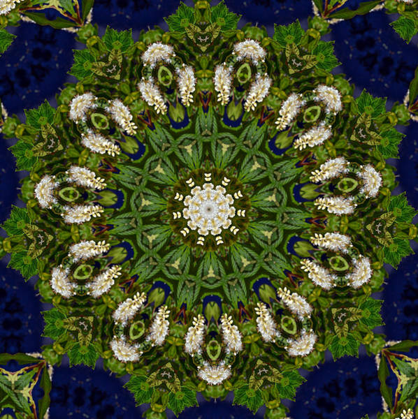 Green Leaf White Flower Mandala Art Print