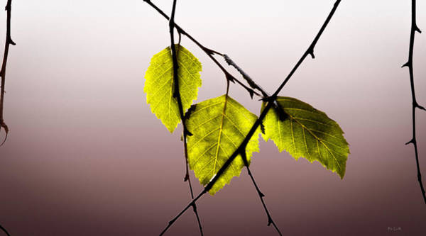 Photograph - Green Leaves by Bob Orsillo