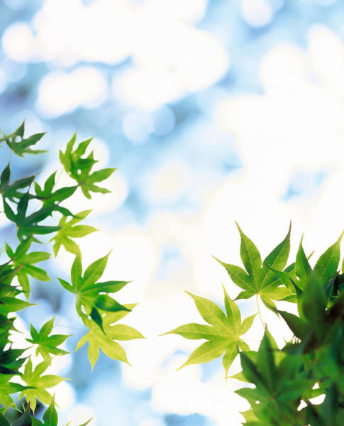 Mottled Wall Art - Photograph - Green Leaves On Mottled Cloudy Sky by Panoramic Images