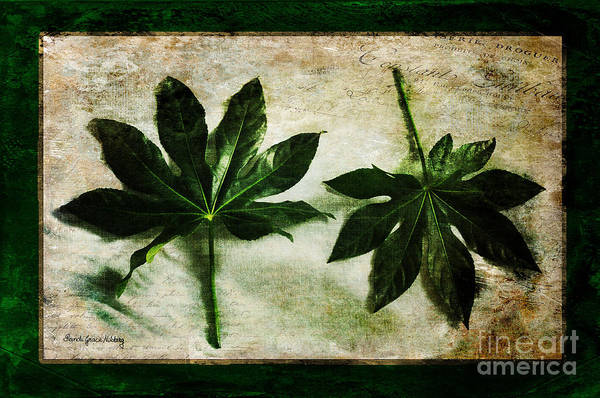 Photograph - Green Leaves by Randi Grace Nilsberg