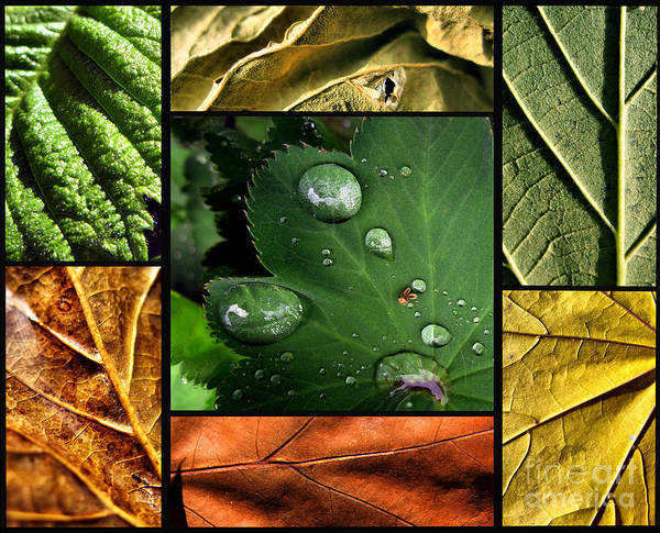 Photograph - Green Leaves Texture Poster by Daliana Pacuraru