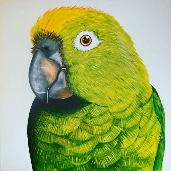 Me Too Painting - Green Macaw by Oli Hill