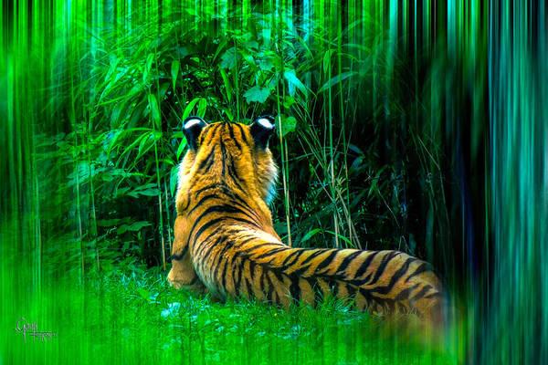 Photograph - Green Meditation by Glenn Feron