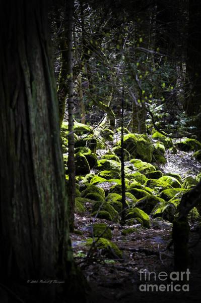 Photograph - Green Moss On Rocks by Richard J Thompson