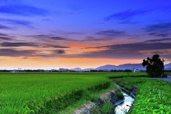 Taiwan Photograph - Green Of Paddy by Taiwan Nans0410