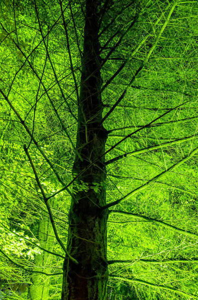 Photograph - Green On Green by Ross G Strachan
