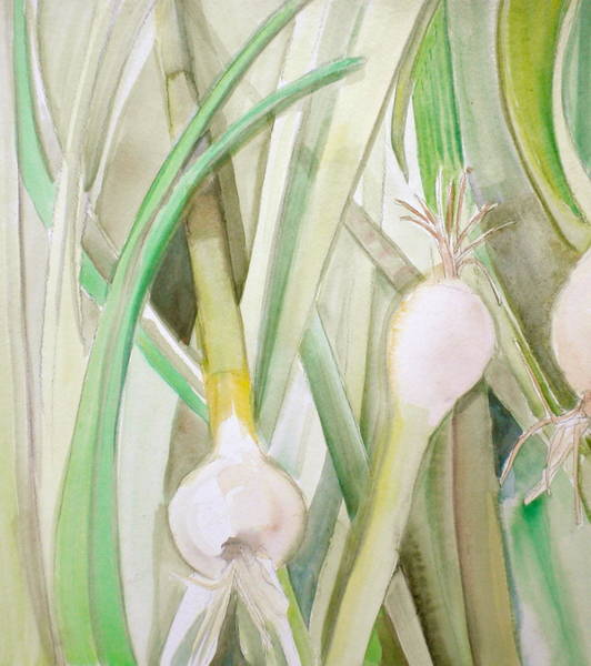 Ingredient Painting - Green Onions by Debi Starr