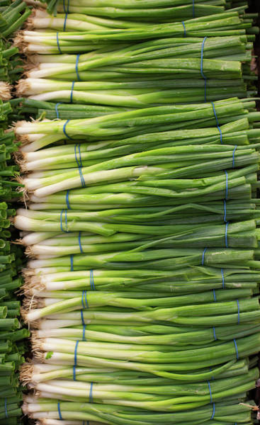 Scallion Photograph - Green Onions by Tuan Tran
