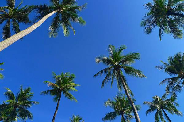 Green Palms Blue Sky Art Print