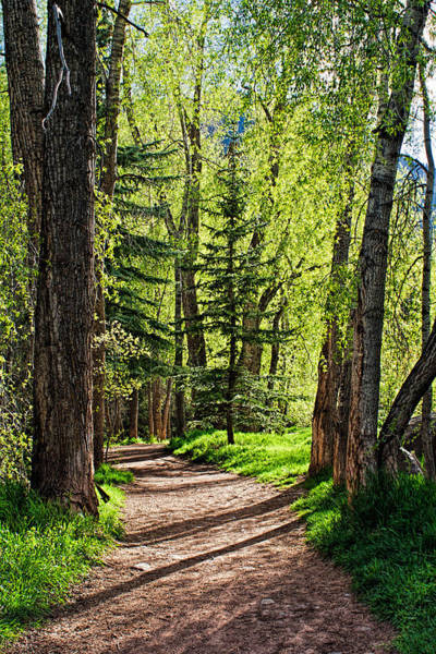 Photograph - Green Pathway by Rick Wicker