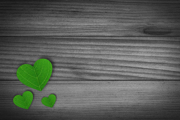 Rustic Furniture Photograph - Green Pedal Shaped Hearts by Aged Pixel