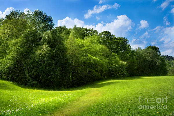 Photograph - Green Relaxing by Lutz Baar