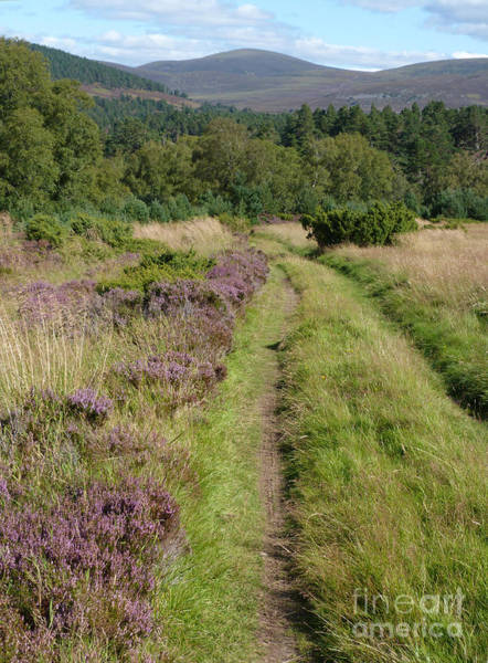 Photograph - Green Road - Abernethy Forest by Phil Banks