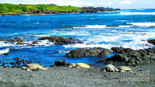 Wall Art - Photograph - Green Sea Turtles And Black Sand by Jerome Stumphauzer