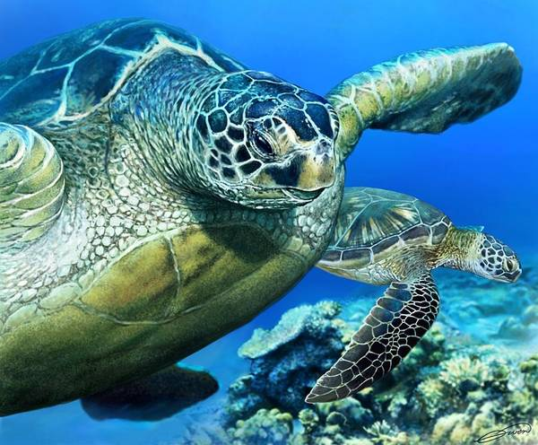 Green Sea Turtle Art Print by Owen Bell