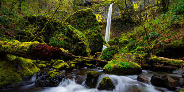 Moss Green Photograph - Green Seasons by Chad Dutson