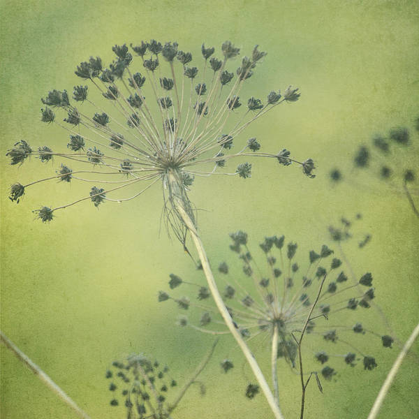 Green Seeds Art Print by Rani Meenagh