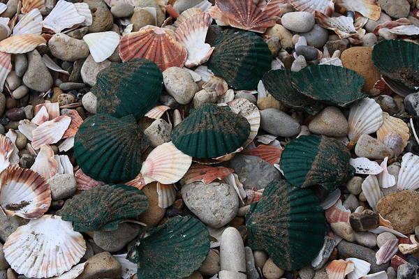 Photograph - Green Shells by Aidan Moran
