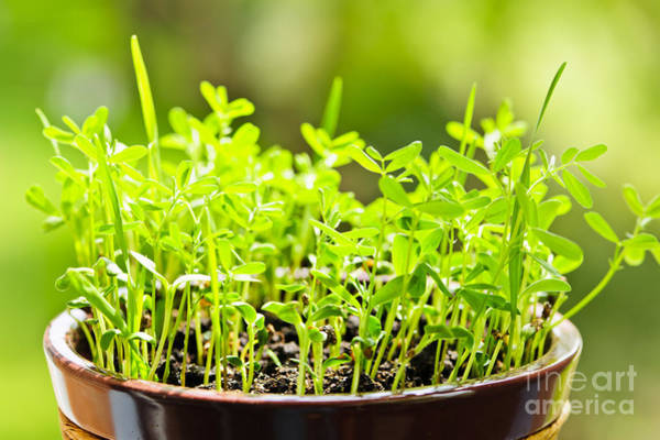 Clay Pot Photograph - Green Spring Seedlings by Elena Elisseeva