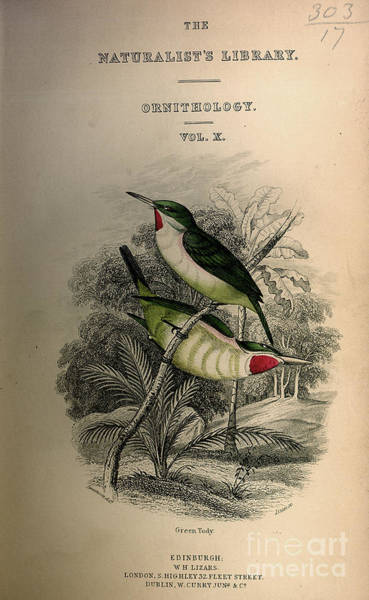 Drawing - Green Tody by Celestial Images