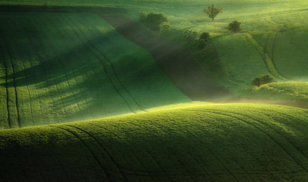 Misty Wall Art - Photograph - Green Tones Of Spring by Marek Boguszak