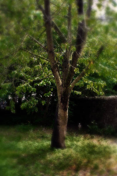 Photograph - Green Tree In Park by Doc Braham