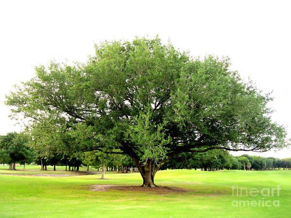 Photograph - Green Tree by Oksana Semenchenko