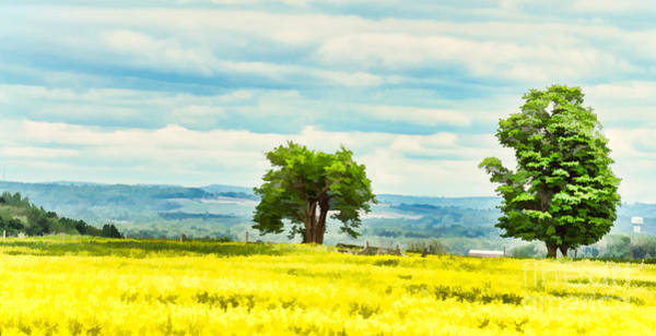 Photograph - Green Trees On A Canola Field by Les Palenik