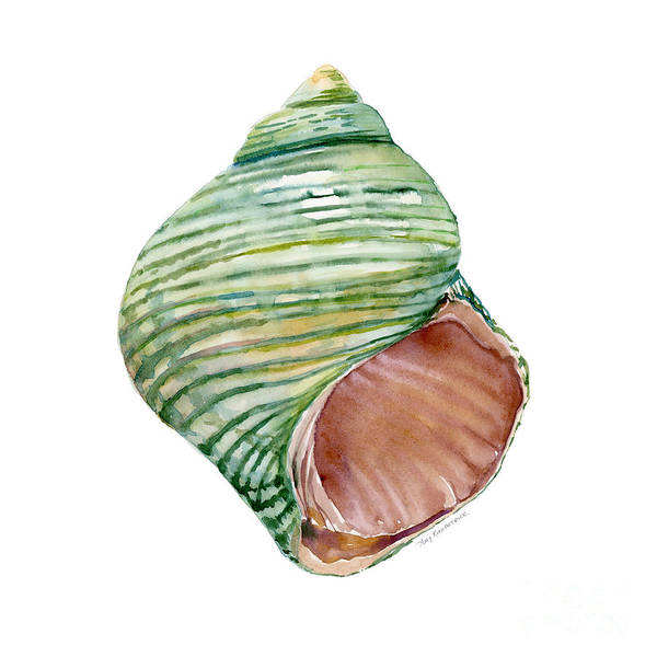 Wall Art - Painting - Green Turbo Shell by Amy Kirkpatrick