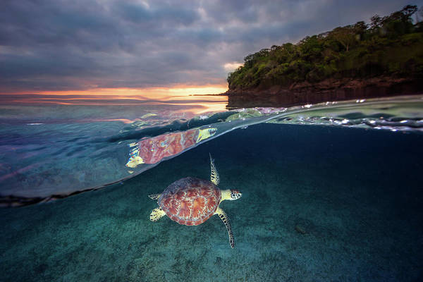 Wall Art - Photograph - Green Turtle With Sunset by Barathieu Gabriel