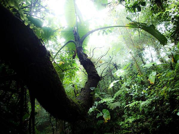 Photograph - Green by Tyler Lucas