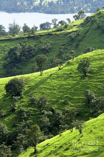 Photograph - Green Valley 1 by Hitendra SINKAR
