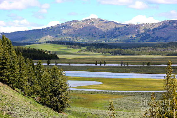 Photograph - Green Valley At Yellowstone by Carol Groenen