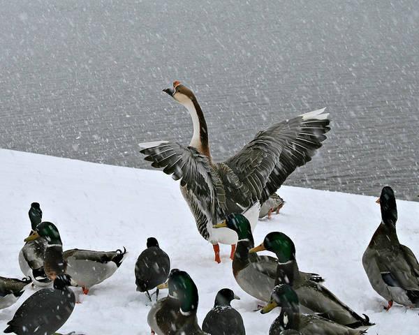 Green Valley Ducks Art Print