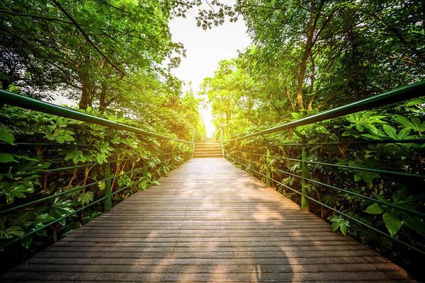 Photograph - Green  Walkway by Chinaface